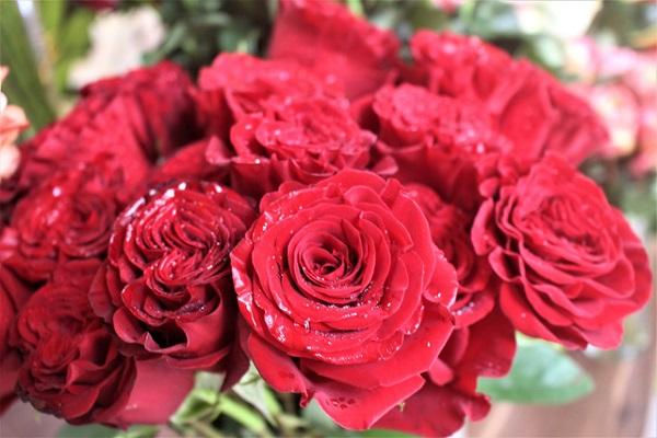 Hoa hồng đỏ- biểu tượng của tình yêu nồng nàn, mãnh liệt
