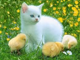 top 3 bài văn miêu tả con mèo nhà em
