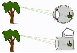 mắt lý 11