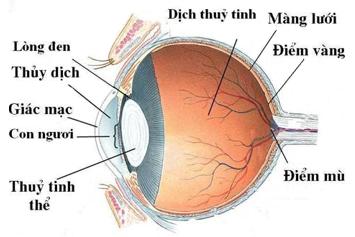 mắt vật lý 11